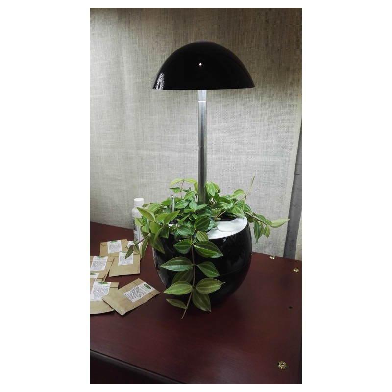 Giardiniere della coltura idroponica per la cultura interna automatica POME (piccolo, nero) - image 23855